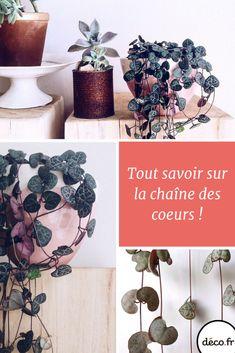 cha ne des c urs ceropegia woodii plantes d 39 int rieurs pinterest le coeur coeur et plantes. Black Bedroom Furniture Sets. Home Design Ideas