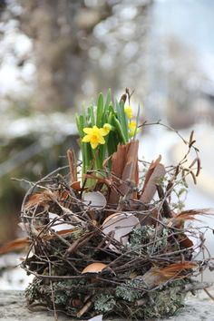 Floral Easter nests (Easter floristry - Natural decoration with daffodils for Easter - Nature Crafts, Decor Crafts, Spring Decoration, Deco Nature, Easter Table Decorations, Deco Table, Daffodils, Easter Crafts, Easter Eggs