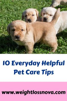 10 Everyday Helpful Pet Care Tips. Being a pet parent is a really important job. Miss My Dog, Great Life, Pet Care Tips, Do Exercise, Dog Park, Vulnerability, Pets, Animals, Animaux