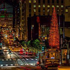 San Francisco Christmas Lights - by Raul Panelo