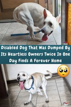 #Disabled #Dog #Dumped #Heartless #Owners #Twice #Day #Home