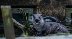 Otter is shocked! Shocked, I tell you! - August 30, 2015