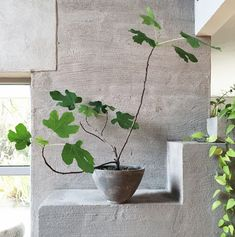 Concrete with plant sculpture. Purple Area