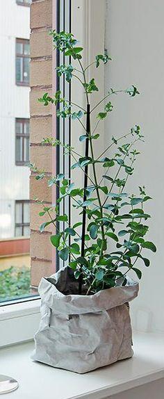 10 eksempler på luftrensende grønne planter og blomster i hjemmet ...