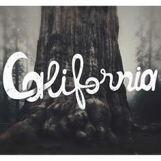 #lettering #california #handlettering #practice #sequoia #rough #50words #california