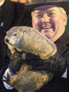 Phil the Groundhog | Phil the Groundhog