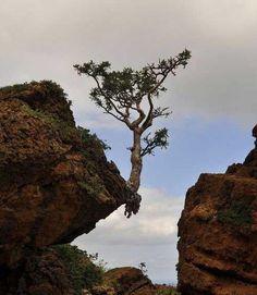 L'arbre triomphant