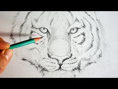 COMMENT DESSINER UN TIGRE EN QUELQUES TRAITS ? | Apprendre à dessiner avec Dessin Création