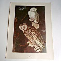 Audubon Bird Print For Framing Snowy Swan Print 1940's Birds of America by treasurecoveally on Etsy