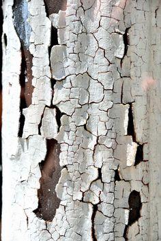 Captures of My Viewfinder Natural Forms, Natural Texture, Patterns In Nature, Textures Patterns, Art Grunge, Visual Texture, Textile Texture, Peeling Paint, Colour Pallette