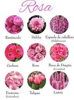 Flores color Rosa | Carmen Merino
