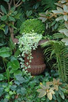 .The bright variegated ivy stands out beautifully against the darker green foliage.