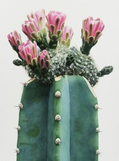 Hyperrealistic Cacti – Honestly WTF