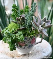 Using antique tea cups and saucers and other antique containers create beautiful arrangements for a table