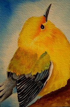 "Small Format Art (SFA) 4x6"" Yellow Warbler, watercolor . . . by Carolynnzart"