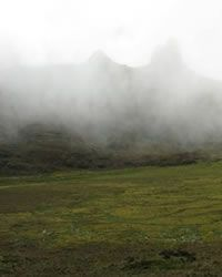 Factortierra :: Paramos, Jalcas y Bosques de Neblina en el norte del Perú :: 18 de Diciembre de 2008