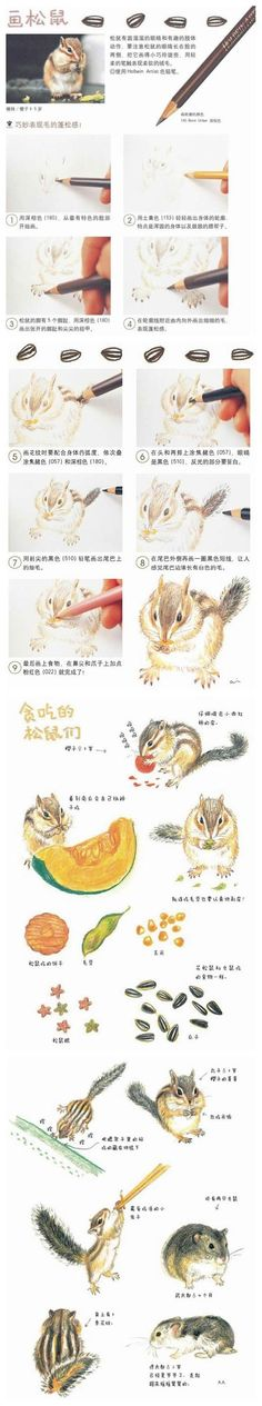 Watercolor or colored pencil squirrel chipmunk rodent