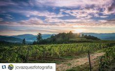 Una vista espectacular  de las viñas  de #Cenlle en #Ribadavia  vía @jcvazquezfotografia  #Ourense #Galicia #Galiza #OurenseMola #SienteGalicia #GaliciaCalidade #GaliciaMaxica  #GALICIAVISUAL #GaliciaMola #GaliciaGlobal #galiciagrafias by sientegalicia_sg