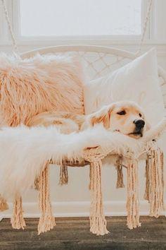 Super Cute Puppies, Cute Baby Dogs, Cute Little Puppies, Super Cute Animals, Cute Dogs And Puppies, Cute Little Animals, Cute Funny Animals, Doggies, Cute Puppy Pics