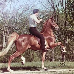 WC New York New York and Richard Clouse. 1981. American Saddlebred, Modern Pictures, Black Horses, Hunter Jumper, Horse Breeds, Show Horses, My Ride, Dressage, Beautiful Horses
