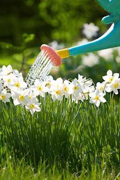 Saveti za zalivanje sobnog cveća.