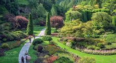 Garden so green by elkynz