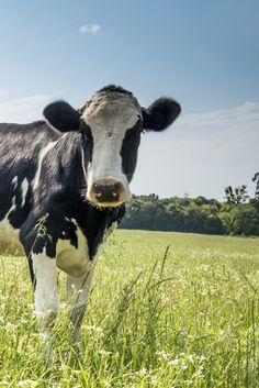 DAIRY: FACT AND FICTION