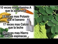 MORINGA... Una PLANTA maravillosa! Sirve para CASI TODO!....  http://fibromialgiadolorinvisible.blogspot.com.ar/2015/08/moringa-una-planta-maravillosa-sirve.html