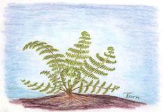 Waldorf ~ 5th grade ~ Botany ~ Ferns ~ main lesson book