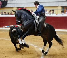 I don't like this sport but admire the horse! Horse Breeds, Show Horses, Dressage, Beautiful Horses, Rodeo, Equestrian, Artwork, Mendoza, Bullfighting