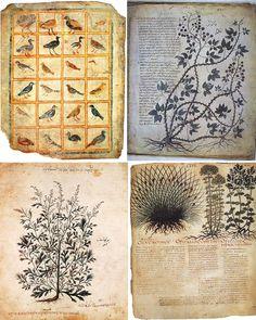 13 Best 19th Century Herbarium Aesthetic Images Herbarium