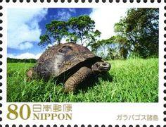 Galapagos Tortoise (Chelonoidis nigra), Ecuador