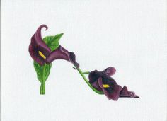 Handpainted Black Calla Lily Slipper Needlepoint canvas by colors1 (Craft Supplies & Tools, Sewing & Needlecraft Supplies, Canvas & Stitchables, calla lily, flower, black calla lily, slipper, shoe, cross stitch, embroidery, pillow, needlepoint, needlepoint canvas, needlepoint pillow, needlecraft, needlepoint pattern)