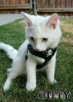 That face.  #AnimalLover #Cats #Kittens #Rescue #RescueCat #ILoveMyCat #HappyEnding #AdoptDontShop #SaveALife #AdoptAPet #BecomeAFoster #FosterFailure  #TheXFoster #KittyPryde #xpupspack  #deharo70