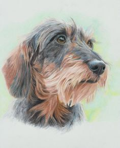 pentekeningen van ruwharige teckels - Google zoeken Dachshund Art, Wire Haired Dachshund, Daschund, Animals And Pets, Cute Animals, Scottish Terrier, Dog Portraits, Animal Paintings, Dog Art