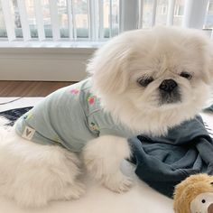 The new clothes again. I actually dont wanna wear clothes. Pekingese Dogs, Japanese Chin, Shih Tzus, Cute Funny Animals, Dog Care, New Outfits, Pugs, Fur Babies, Puppies