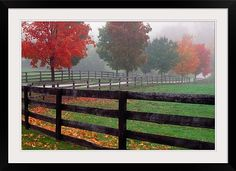 Fenceline and wet road, autumn color trees in mist, Maryland