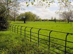 Tree Guards Amp Ornamental Victorian Tree Fences Livestock
