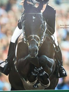 This horse, shown, by Beezie Madden crosses his legs when he jumps! Amazing!