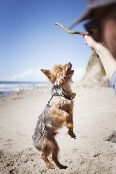 Here are six common styles of dog play and how to find the right game for your dog. Dog Activities, Dog Breeds, Your Dog, Dog Lovers, Corgi, Games, Fun, Animals, Play