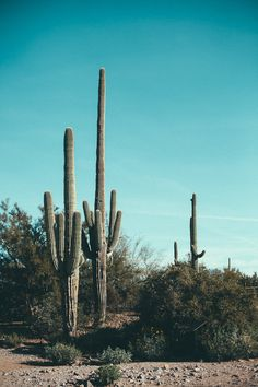 cactus friends | my name is yeh