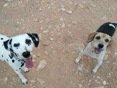 Dama y Robín en el parque canino 05/16