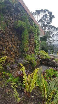 Uma das fontes no Cerro de Monserrate - Bogotá River, Outdoor, Screenwriting, Gift, Colombia, Fernando Botero, Jungles, Waterfalls, Earth