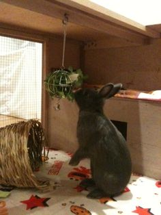 http://forums.rabbitrehome.org.uk/showthread.php?370131-New-indoor-hutch-finally-finished!