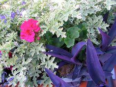 Astonishing colour palette at Butchart Sunken Garden, Italian Garden, Palette, Gardens, Colour, Plants, Color, Outdoor Gardens, Pallets