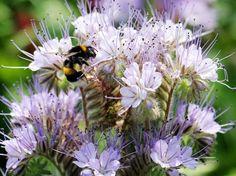 Herb Garden, Bloom, Herbs, Flowers, Plants, Industrial, Gardening, Business, Natural Garden