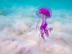 Types Of Jellyfish And Jellyfish Pictures