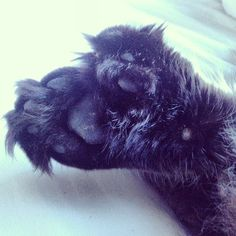 I haz more toes than you