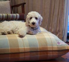 Vintage Blanket Bed- Caramel/Blue - hardtofind.
