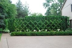 http://www.espaliertrees.com/news/2014/8/22/how-to-use-a-belgian-fence-espalier-in-your-landscape-design July 26a 2012 016.jpg